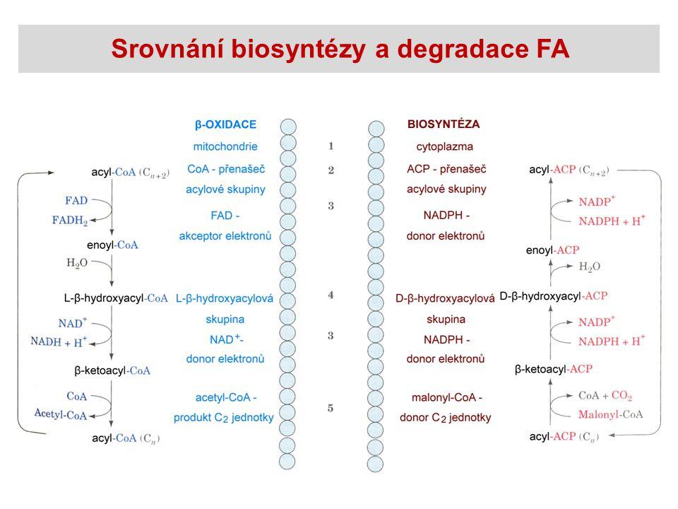 Srovnání biosyntézy a degradace FA