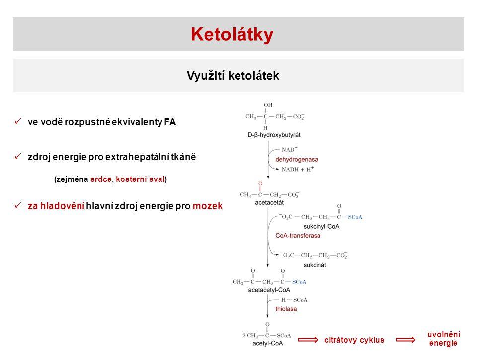 Ketolátky Využití ketolátek citrátový cyklus zdroj energie pro extrahepatální tkáně (zejména srdce, kosterní sval) za hladovění hlavní zdroj energie p