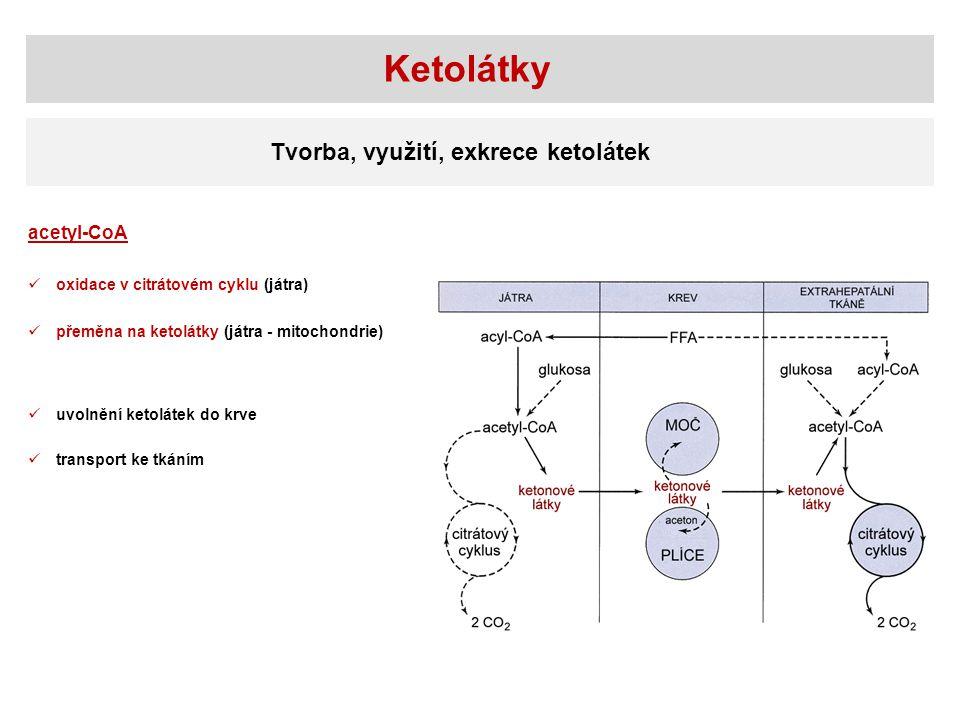 Ketolátky Tvorba, využití, exkrece ketolátek acetyl-CoA oxidace v citrátovém cyklu (játra) přeměna na ketolátky (játra - mitochondrie) uvolnění ketolá