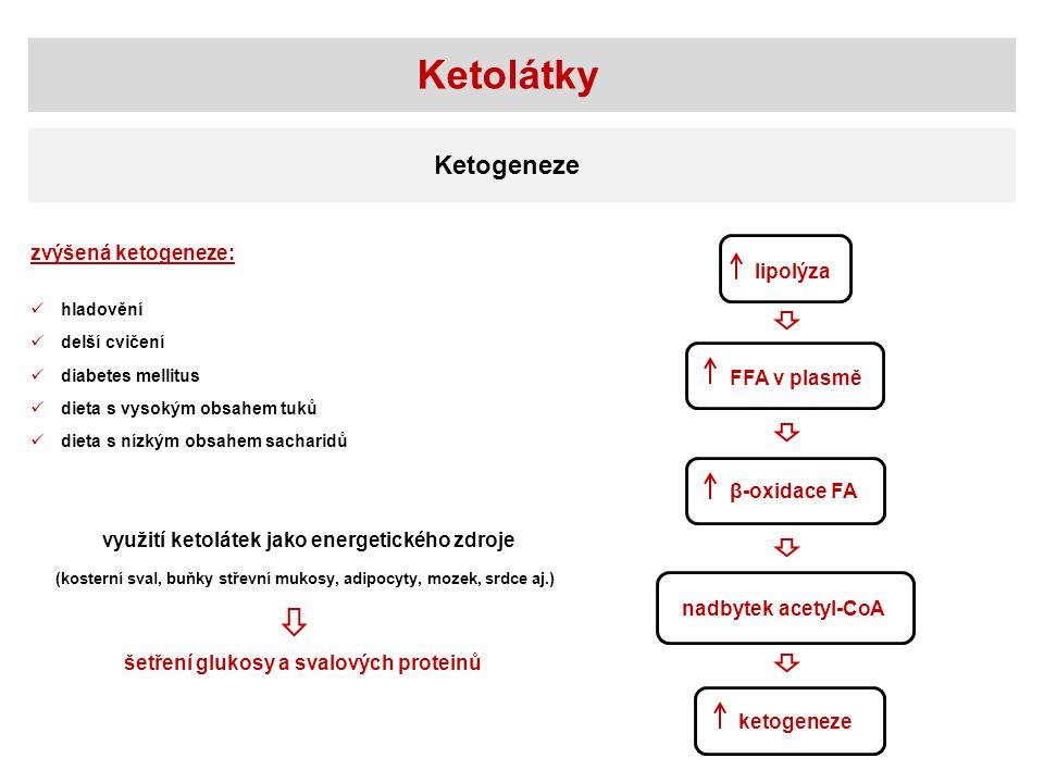 Ketolátky lipolýza FFA v plasmě β-oxidace FA nadbytek acetyl-CoA ketogeneze zvýšená ketogeneze: hladovění delší cvičení diabetes mellitus dieta s vyso