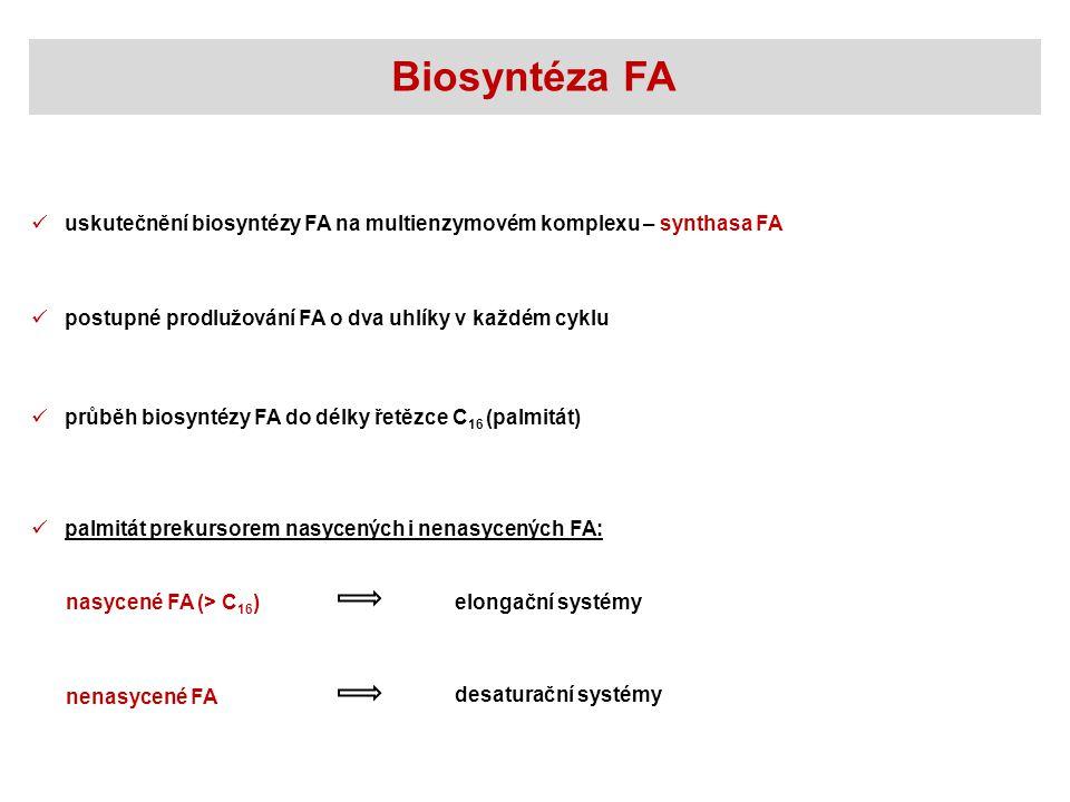 postupné prodlužování FA o dva uhlíky v každém cyklu Biosyntéza FA uskutečnění biosyntézy FA na multienzymovém komplexu – synthasa FA průběh biosyntéz