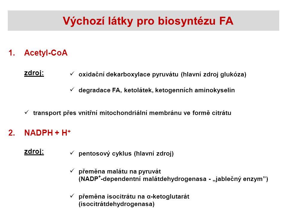 Výchozí látky pro biosyntézu FA Acetyl-CoA1. zdroj: oxidační dekarboxylace pyruvátu (hlavní zdroj glukóza) NADPH + H + 2. zdroj: pentosový cyklus (hla