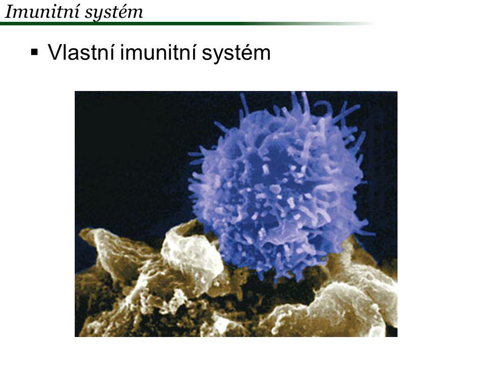 Imunitní systém – základní principy 1)vymezení vlastního organismu, ochranný systémem proti vniknutí cizích částic 2)schopnost rozpoznat parazita 3)efektorové mechanismy Principy detekce parazita:  Rozpoznávání cizího (TCR, BCR)  Rozpoznávání absence vlastního (komplement, NK buňky, tolerance vlastního)  Rozpoznávání nebezpečného (TLR, NLR)  Rozpoznávání porušení integrity (mj.