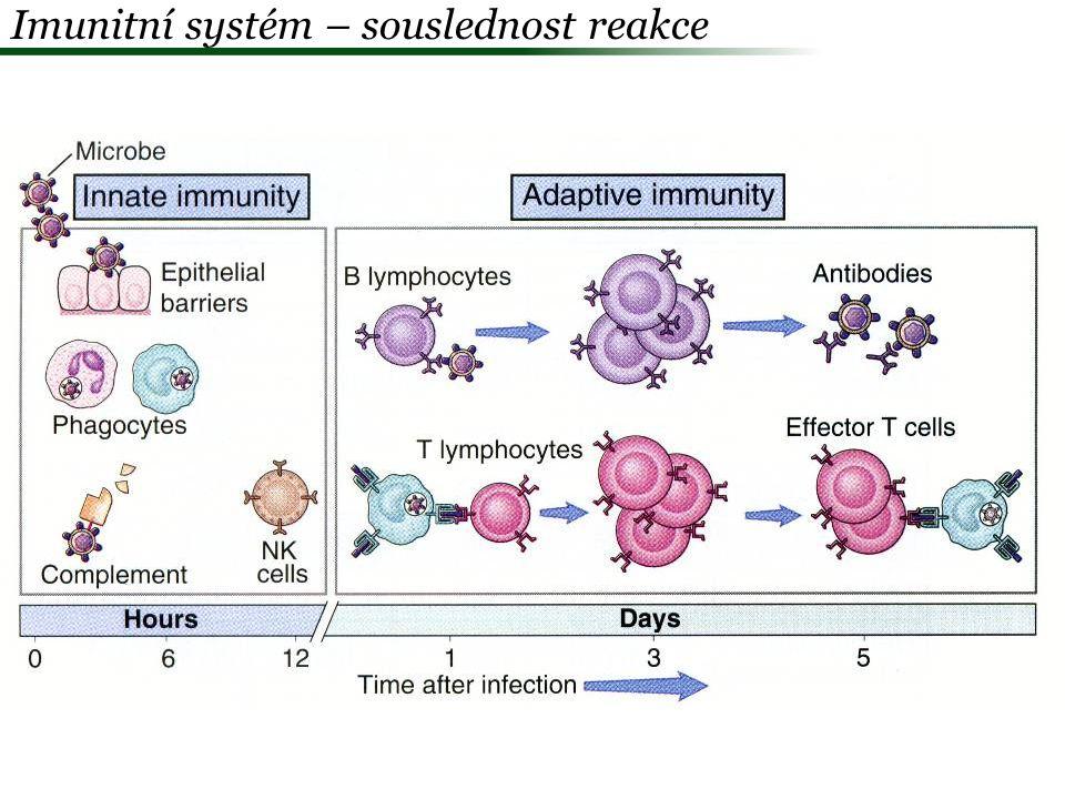  Antigenně specifické = získané = adaptivní mechanismy -evolučně odvozená – jen strunatci - ?opravdu.