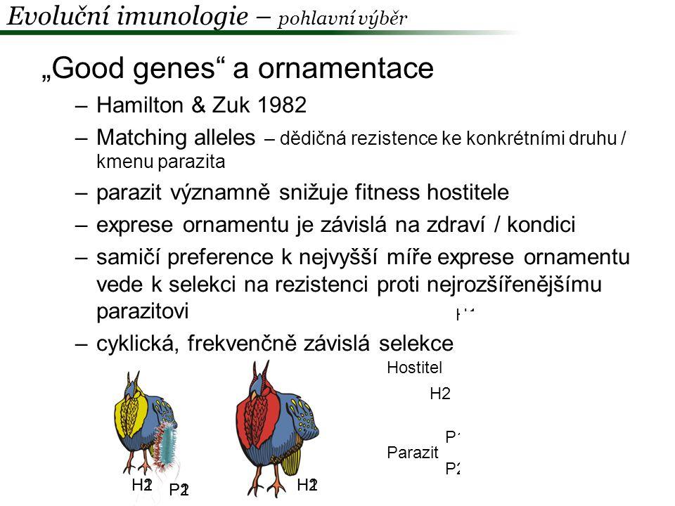 """""""Good genes a ornamentace Predikce: 1.Ve vnitrodruhovém srovnání budou samci s více elaborovaným ornamentem méně parazitovaní 2.V mezidruhovém srovnání budou více parazitované druhy zároveň ty více ornamentované Hýl mexický ( Carpodacus mexicanus) Mycoplasma gallisepticum - více ornamentovaní samci dokáží infekci potlačit Evoluční imunologie – pohlavní výběr Hill & Farmer 2005"""