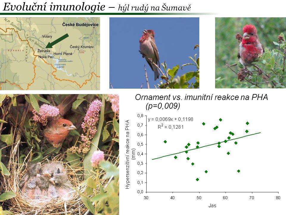 Ornament otce vs.H/L (p=0,049) Evoluční imunologie – hýl rudý na Šumavě Ornament otce vs.