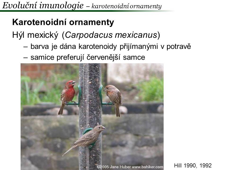 Immunocompetence handicap hypothesis -testosteron-dependentní ornamentace -testosteron je imunosupresivní (snad realokace zdrojů) -vysoká kvalita x vyšší riziko nemoci -melaninové ornamenty modropláštík nádherný, vrabec domácí Evoluční imunologie – pohlavní výběr