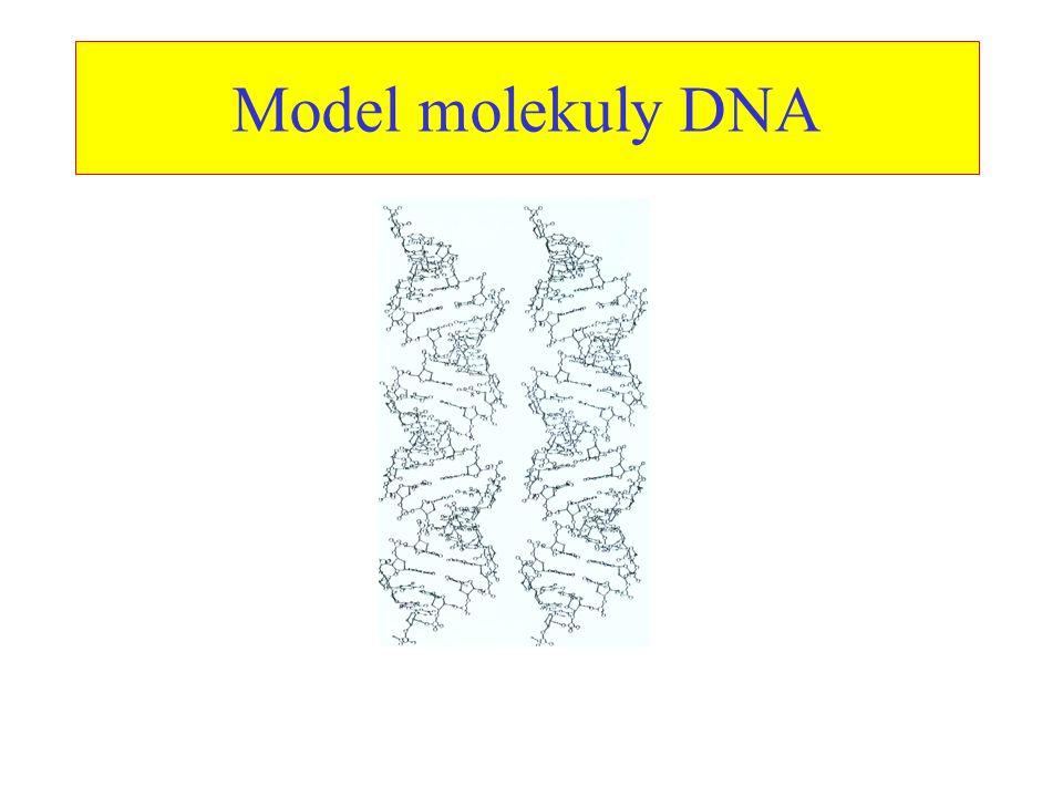 Model molekuly DNA