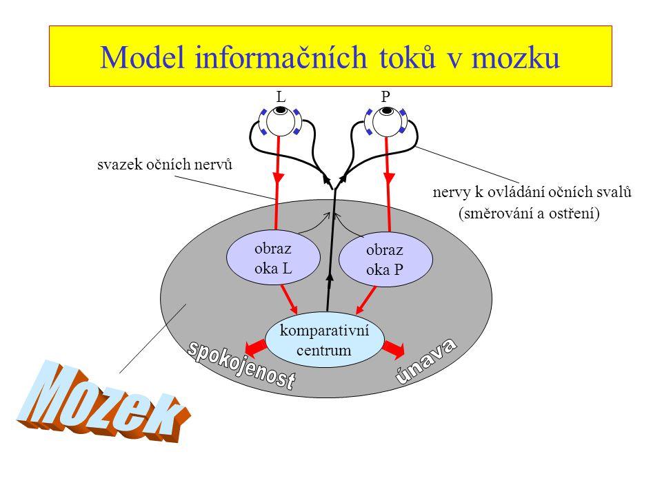 Model informačních toků v mozku LP obraz oka L obraz oka P komparativní centrum svazek očních nervů nervy k ovládání očních svalů (směrování a ostření