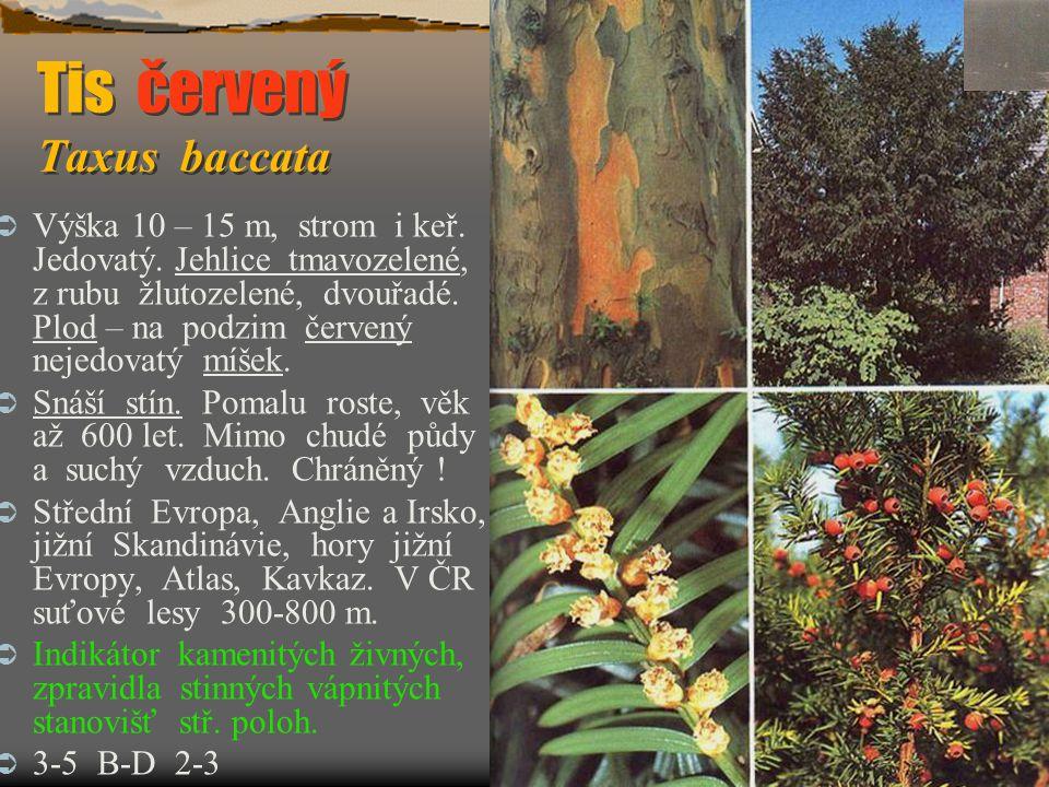 Tis červený Taxus baccata Tis červený Taxus baccata  Výška 10 – 15 m, strom i keř. Jedovatý. Jehlice tmavozelené, z rubu žlutozelené, dvouřadé. Plod
