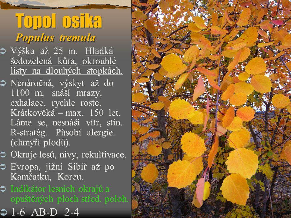 Topol osika Populus tremula Topol osika Populus tremula  Výška až 25 m. Hladká šedozelená kůra, okrouhlé listy na dlouhých stopkách.  Nenáročná, výs