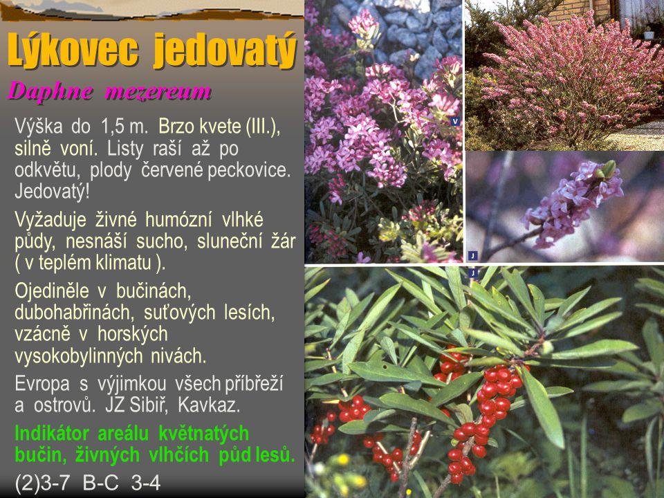 Lýkovec jedovatý Daphne mezereum Výška do 1,5 m. Brzo kvete (III.), silně voní. Listy raší až po odkvětu, plody červené peckovice. Jedovatý! Vyžaduje