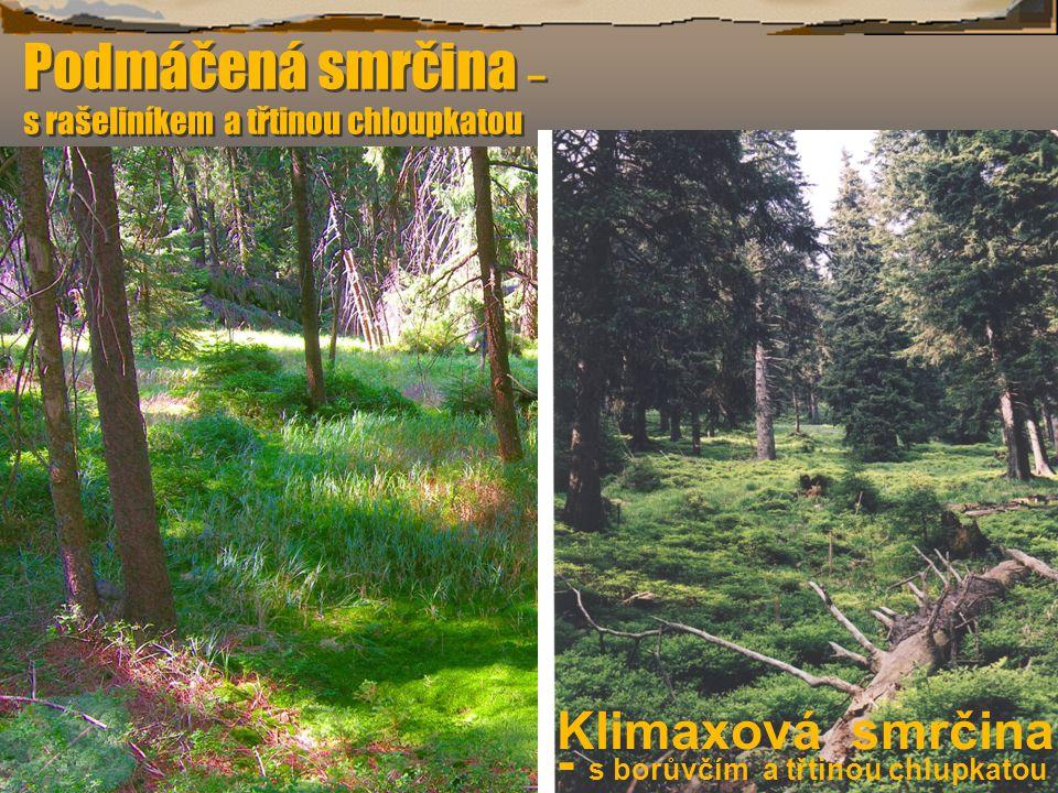 Brusinka obecná Vaccinium vitis-idaea Brusinka obecná Vaccinium vitis-idaea VVždyzelený keříček do 30 cm výšky, listy 1-2 cm, celokraj- né, tuhé, podvinuté; líc tmavo- zelený, rub světlezelený, hnědě tečkovaný (rozdíl proti podobné medvědici lék.).