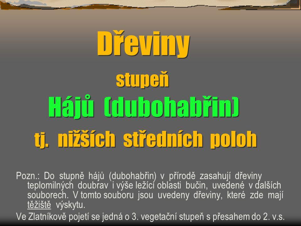Borovice lesní Pinus sylvestris PPřirozené bory v Česko-Saském Švýcarsku