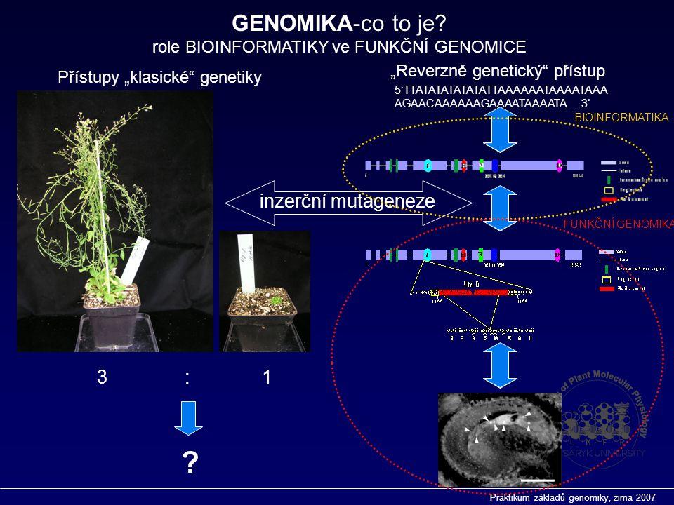 """Praktikum základů genomiky, zima 2007  Role BIOINFORMATIKY v současném pojetí FUNKČNÍ GENOMIKY  Databáze  Spektrum """"on-line zdrojů  PRIMÁRNÍ, SEKUNDÁRNÍ a STRUKTURÁLNÍ databáze  GENOMOVÉ zdroje Základy genomiky I."""