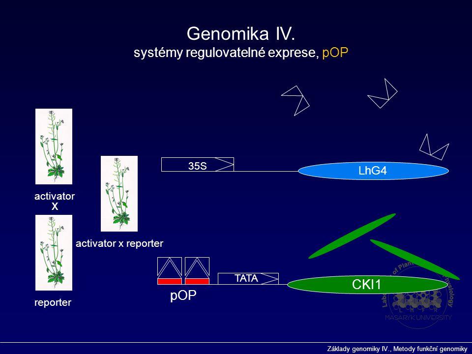 Základy genomiky IV., Metody funkční genomiky 35S LhG4 pOP TATA CKI1 activator reporter activator x reporter x Genomika IV. systémy regulovatelné expr