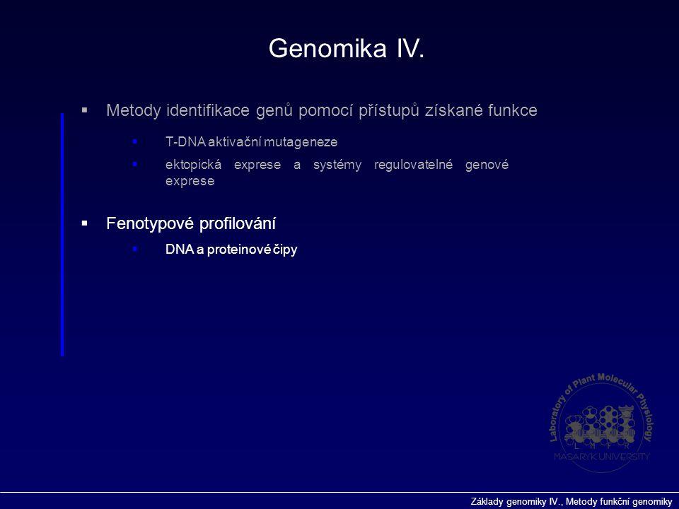 Základy genomiky IV., Metody funkční genomiky  Fenotypové profilování Genomika IV.  DNA a proteinové čipy  Metody identifikace genů pomocí přístupů