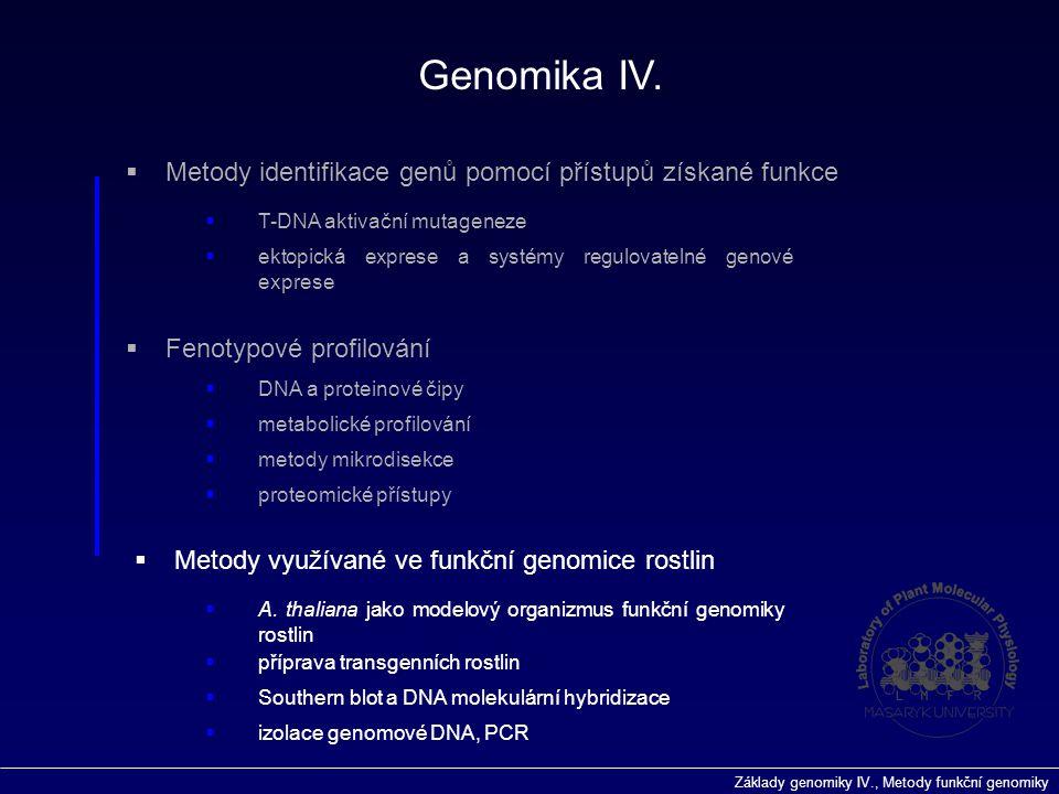 Základy genomiky IV., Metody funkční genomiky  Fenotypové profilování Genomika IV.  příprava transgenních rostlin  Metody využívané ve funkční geno