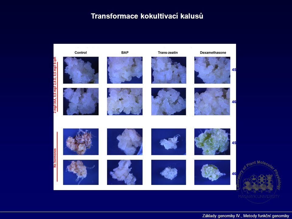 Základy genomiky IV., Metody funkční genomiky Transformace kokultivací kalusů
