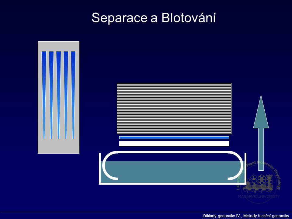 Základy genomiky IV., Metody funkční genomiky Separace a Blotování