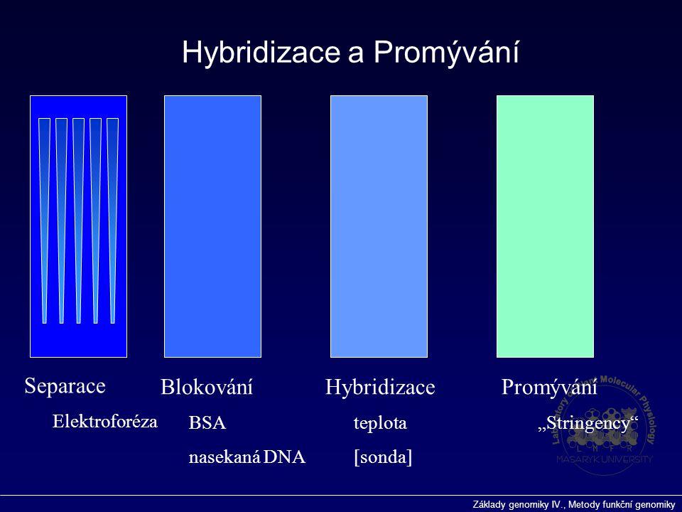 """Základy genomiky IV., Metody funkční genomiky Blokování BSA nasekaná DNA Hybridizace teplota [sonda] Promývání """"Stringency"""" Hybridizace a Promývání Se"""