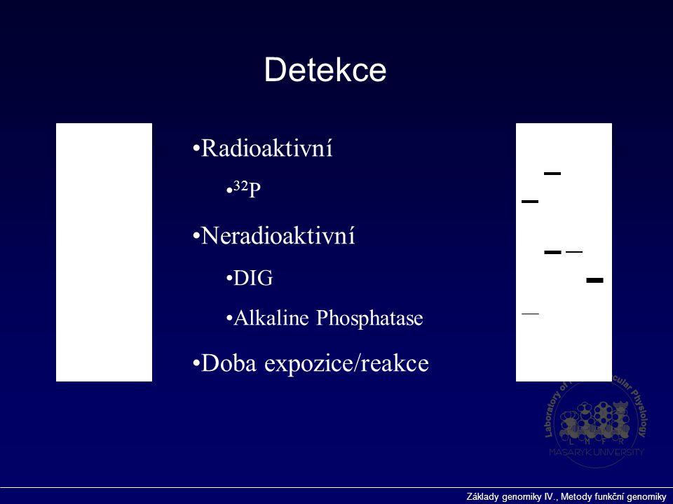 Základy genomiky IV., Metody funkční genomiky Detekce Radioaktivní 32 P Neradioaktivní DIG Alkaline Phosphatase Doba expozice/reakce