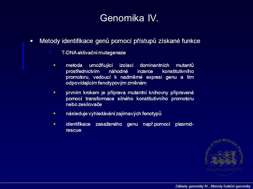 Základy genomiky IV., Metody funkční genomiky  Metody identifikace genů pomocí přístupů získané funkce  T-DNA aktivační mutageneze Genomika IV.  me