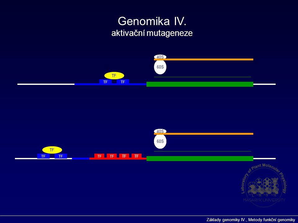 Základy genomiky IV., Metody funkční genomiky TF 40S 60S TF 40S 60S 40S 60S 40S 60S 40S 60S Genomika IV. aktivační mutageneze TF
