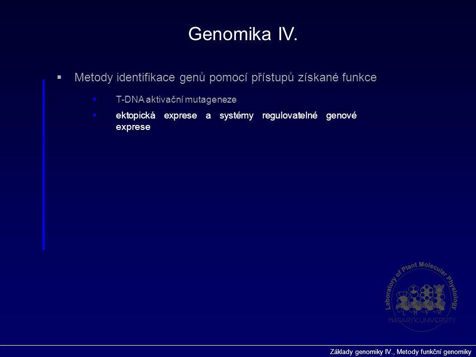 Základy genomiky IV., Metody funkční genomiky Genomika IV.  Metody identifikace genů pomocí přístupů získané funkce  T-DNA aktivační mutageneze  ek