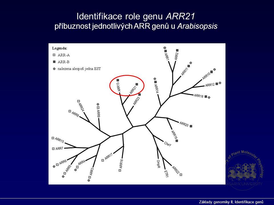 Základy genomiky II, Identifikace genů Identifikace role genu ARR21 příbuznost jednotlivých ARR genů u Arabisopsis