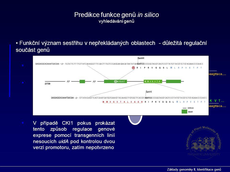 Základy genomiky II, Identifikace genů Funkční význam sestřihu v nepřekládaných oblastech - důležitá regulační součást genů  Translační represe prost