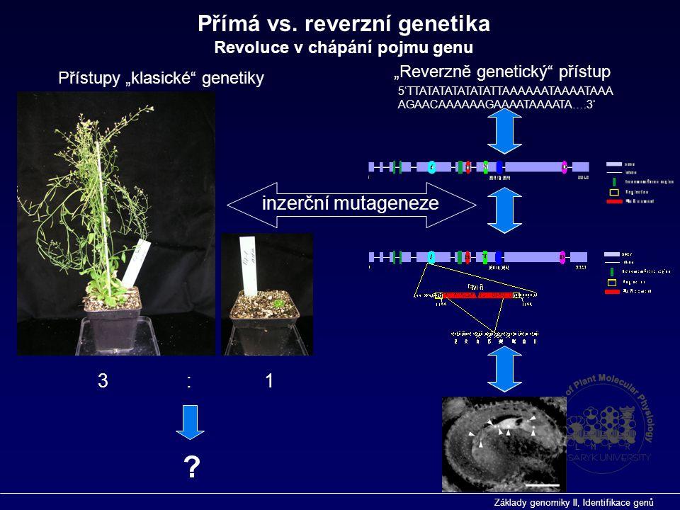 """Základy genomiky II, Identifikace genů 3 : 1 Přístupy """"klasické"""" genetiky """"Reverzně genetický"""" přístup ? inzerční mutageneze 5'TTATATATATATATTAAAAAATA"""