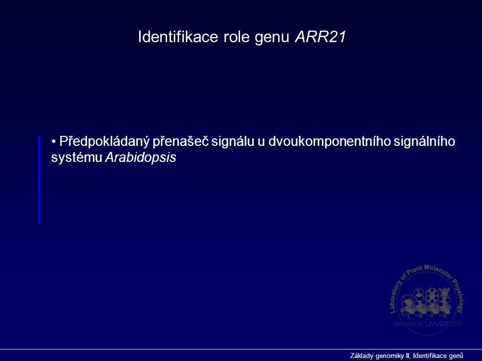 Základy genomiky II, Identifikace genů  Gen ARR21 identifikován pomocí srovnávací analýzy genomu Arabidopsis Inzerční mutageneze ve funkční genomice Arabidopsis thaliana  Byla prokázána místně specifická exprese genu ARR21 na úrovni RNA  Inzerční mutageneze v případě identifikace funkce genu ARR21 ve vývoji Arabidopsis byla neúspěšná, pravděpodobně v důsledku funkční redundance v rámci genové rodiny  Na základě analýzy sekvence byla předpovězena jeho funkce