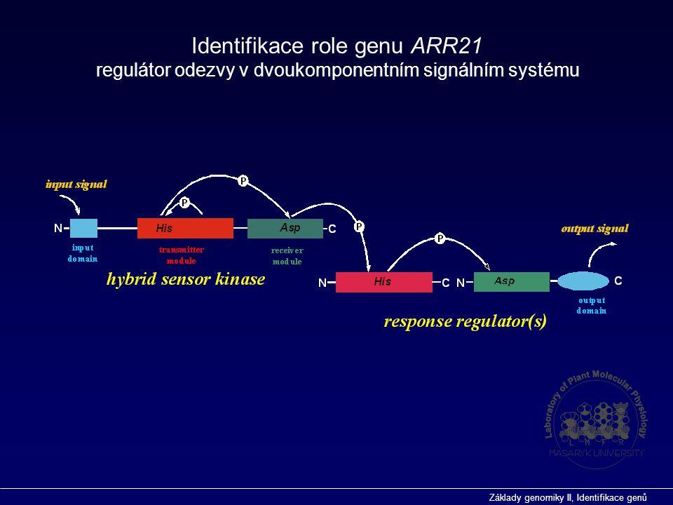 Základy genomiky II, Identifikace genů Předpokládaný přenašeč signálu u dvoukomponentního signálního systému Arabidopsis Identifikace role genu ARR21 Mutant identifikován vyhledáváním v databázi inzerčních mutantů (SINS-sequenced insertion site) pomocí programu BLAST