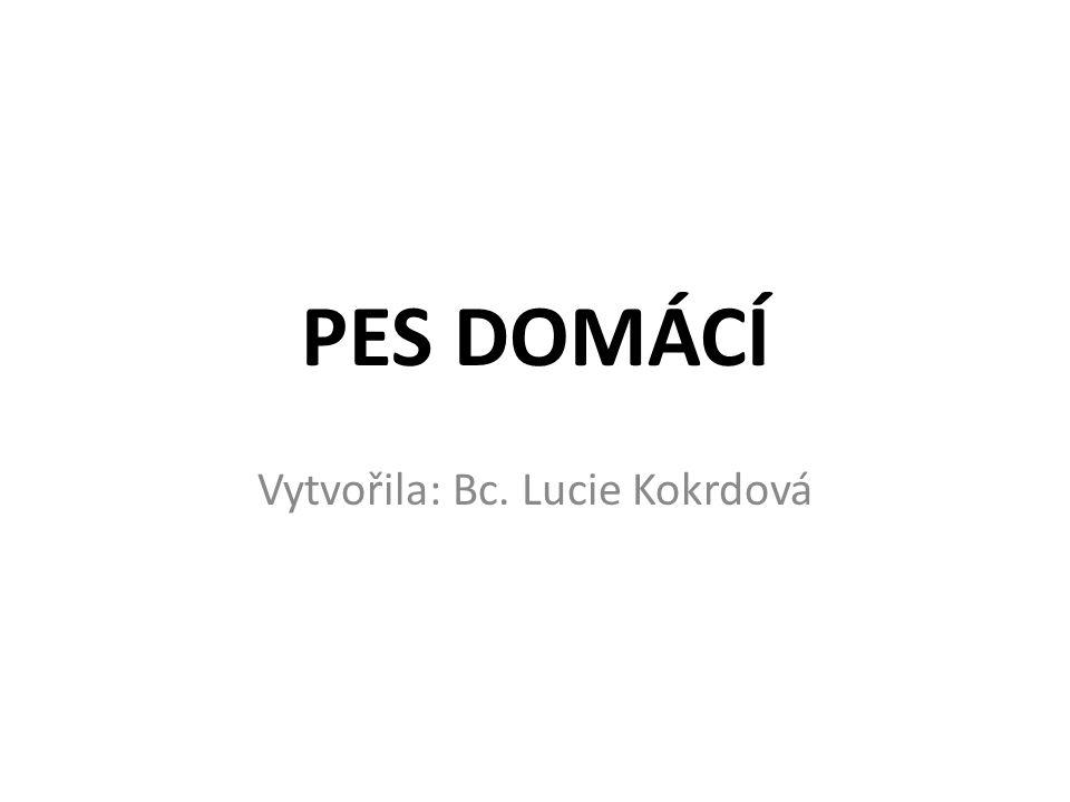 PES DOMÁCÍ Vytvořila: Bc. Lucie Kokrdová