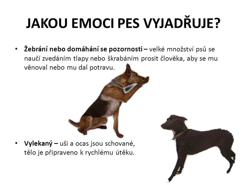 JAKOU EMOCI PES VYJADŘUJE? Žebrání nebo domáhání se pozornosti – velké množství psů se naučí zvedáním tlapy nebo škrabáním prosit člověka, aby se mu v