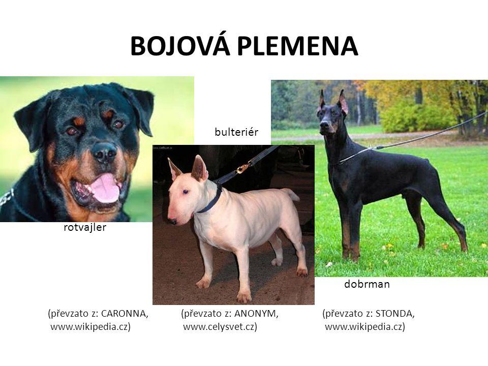 BOJOVÁ PLEMENA (převzato z: CARONNA, (převzato z: ANONYM, (převzato z: STONDA, www.wikipedia.cz) www.celysvet.cz) www.wikipedia.cz) rotvajler bulterié