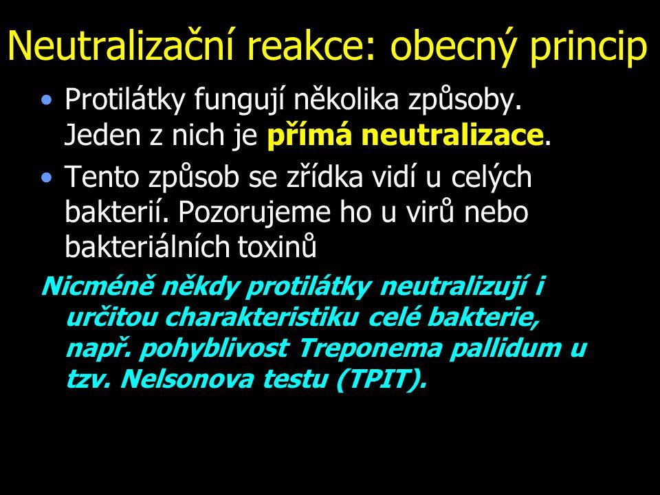 Neutralizační reakce: obecný princip Protilátky fungují několika způsoby. Jeden z nich je přímá neutralizace. Tento způsob se zřídka vidí u celých bak