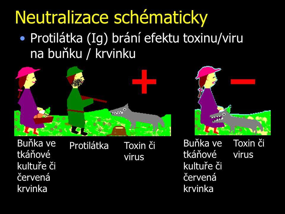 Neutralizace schématicky Protilátka (Ig) brání efektu toxinu/viru na buňku / krvinku Buňka ve tkáňové kultuře či červená krvinka Toxin či virus Protil