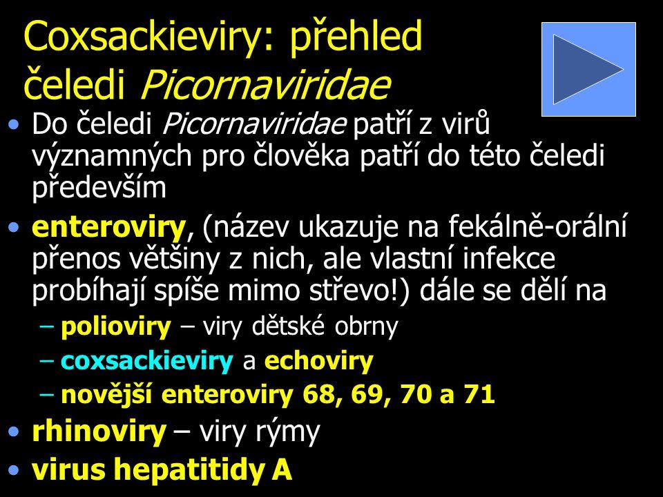 Coxsackieviry: přehled čeledi Picornaviridae Do čeledi Picornaviridae patří z virů významných pro člověka patří do této čeledi především enteroviry, (