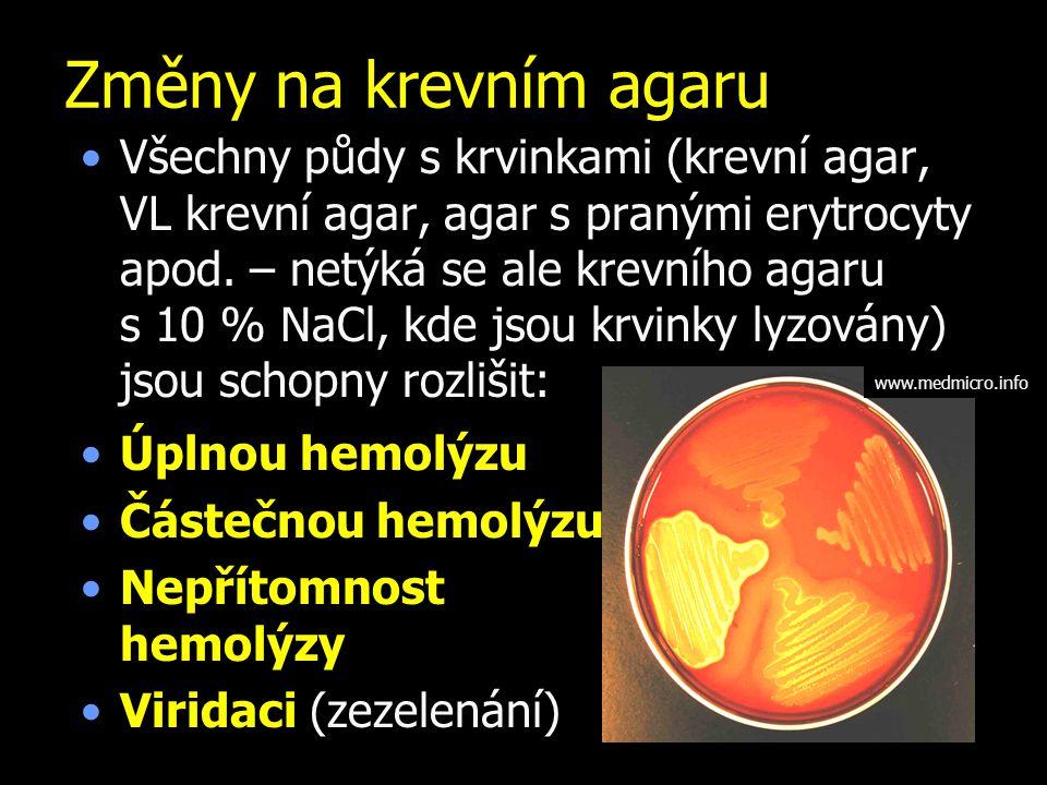 Změny na krevním agaru Všechny půdy s krvinkami (krevní agar, VL krevní agar, agar s pranými erytrocyty apod. – netýká se ale krevního agaru s 10 % Na