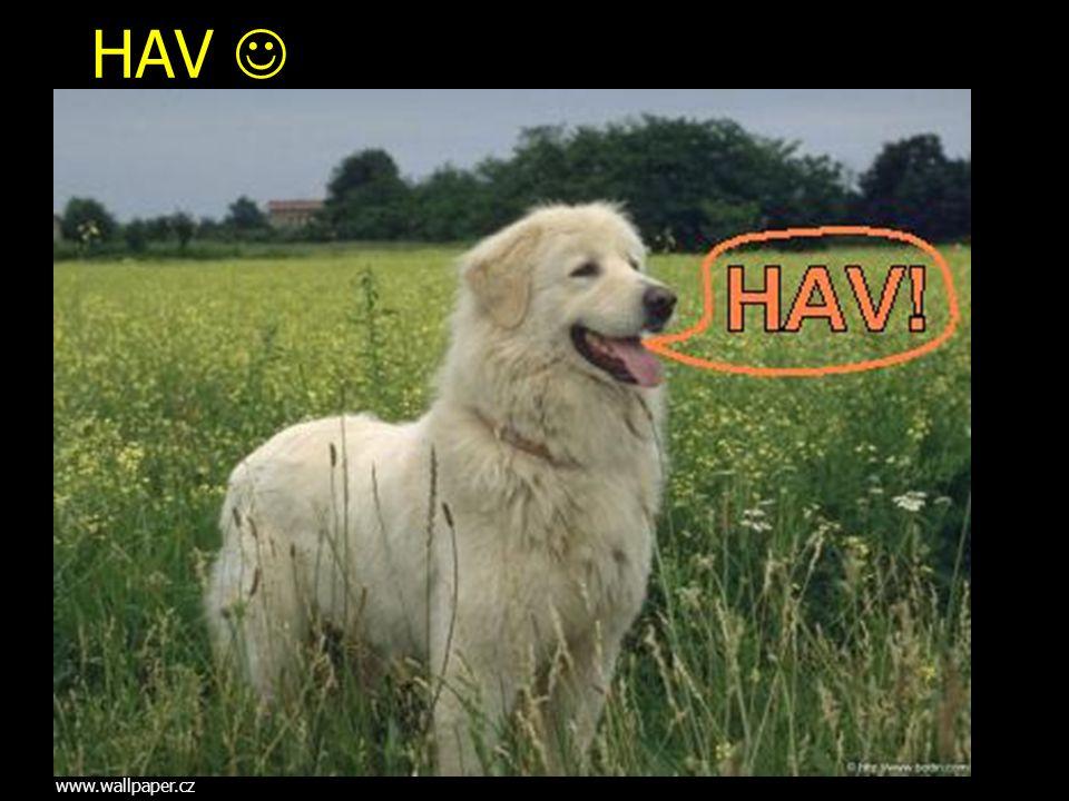 HAV www.wallpaper.cz