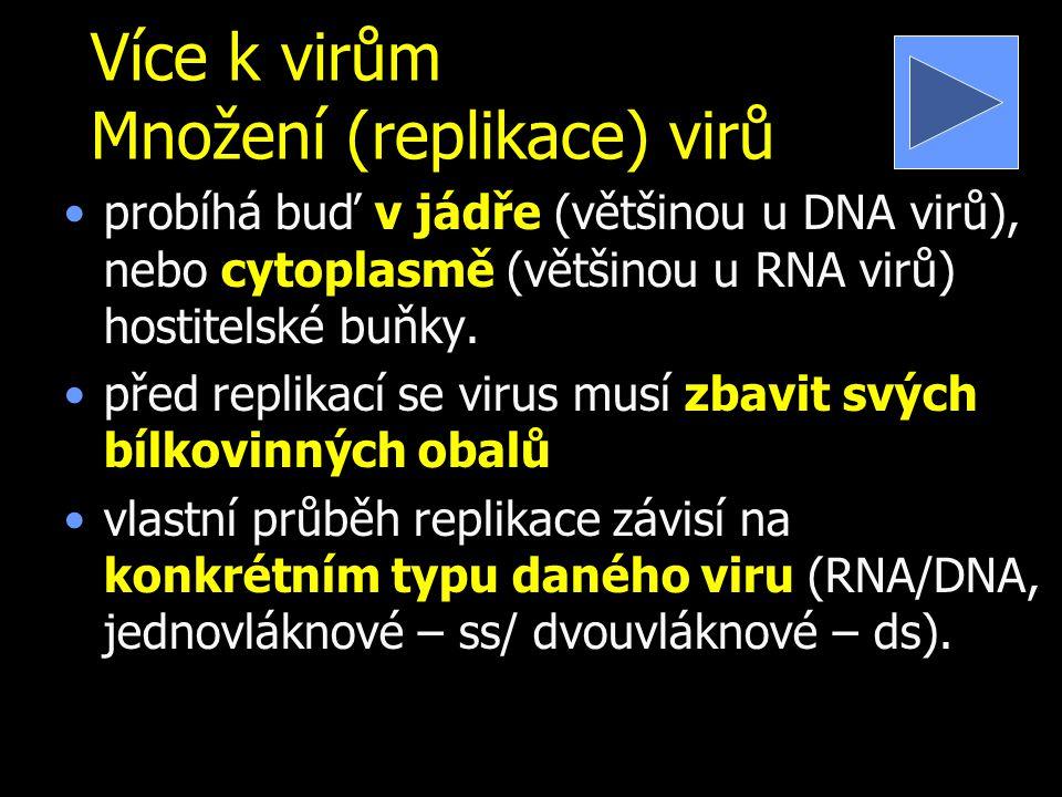 Více k virům Množení (replikace) virů probíhá buď v jádře (většinou u DNA virů), nebo cytoplasmě (většinou u RNA virů) hostitelské buňky.