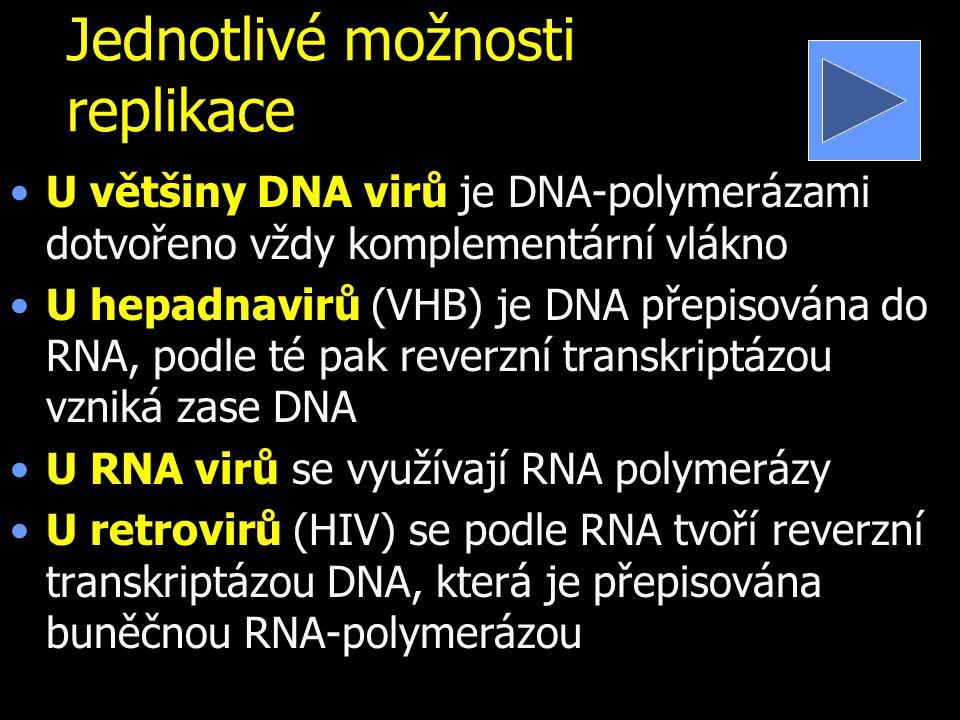Jednotlivé možnosti replikace U většiny DNA virů je DNA-polymerázami dotvořeno vždy komplementární vlákno U hepadnavirů (VHB) je DNA přepisována do RNA, podle té pak reverzní transkriptázou vzniká zase DNA U RNA virů se využívají RNA polymerázy U retrovirů (HIV) se podle RNA tvoří reverzní transkriptázou DNA, která je přepisována buněčnou RNA-polymerázou