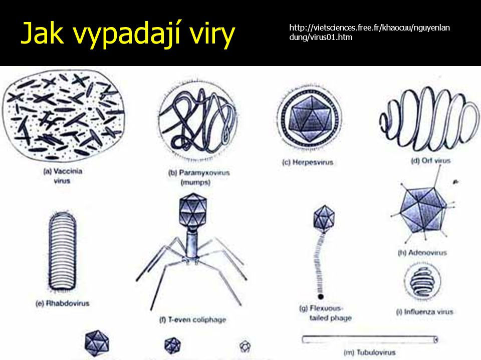 Jak vypadají viry http://vietsciences.free.fr/khaocuu/nguyenlan dung/virus01.htm