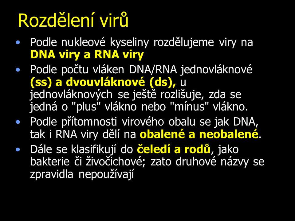 Rozdělení virů Podle nukleové kyseliny rozdělujeme viry na DNA viry a RNA viry Podle počtu vláken DNA/RNA jednovláknové (ss) a dvouvláknové (ds), u jednovláknových se ještě rozlišuje, zda se jedná o plus vlákno nebo mínus vlákno.