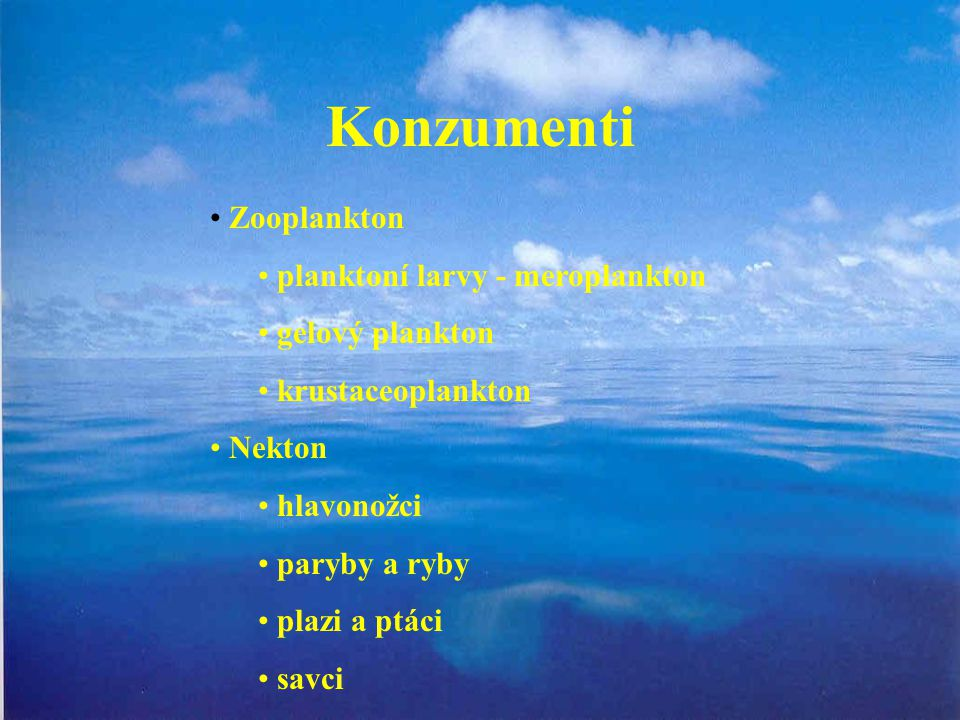 Konzumenti Zooplankton planktoní larvy - meroplankton gelový plankton krustaceoplankton Nekton hlavonožci paryby a ryby plazi a ptáci savci