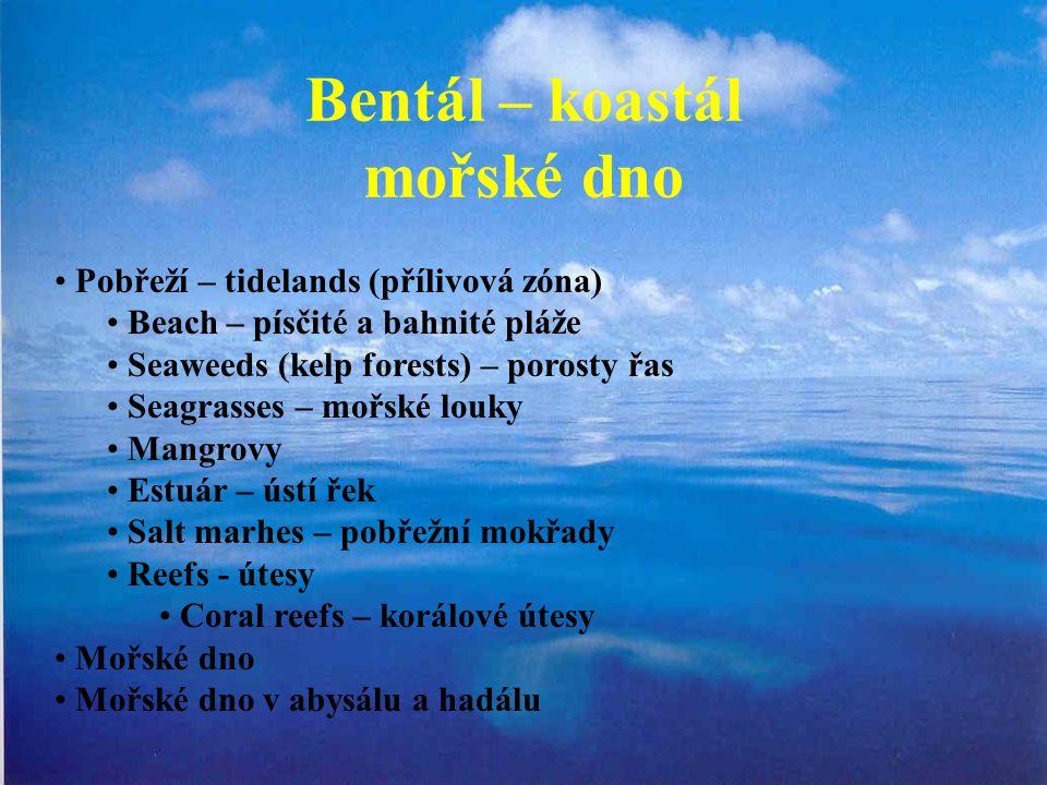 Bentál – koastál mořské dno Pobřeží – tidelands (přílivová zóna) Beach – písčité a bahnité pláže Seaweeds (kelp forests) – porosty řas Seagrasses – mo
