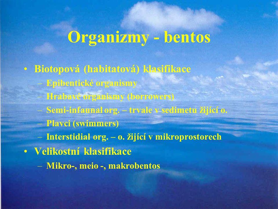 Organizmy - bentos Biotopová (habitatová) klasifikace –Epibentické organismy –Hrabavé organismy (borrowers) –Semi-infaunal org. – trvale v sedimetu ži