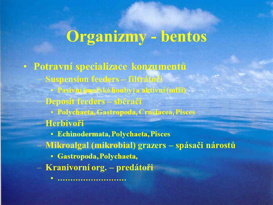 Organizmy - bentos Potravní specializace konzumentů –Suspension feeders – filtrátoři Pasivní (mořské houby) a aktivní (mlži) –Deposit feeders – sběrač